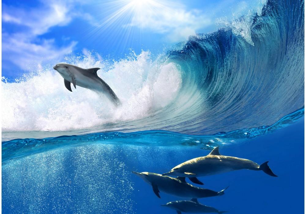 Afbeeldingen Van Dolfijnen