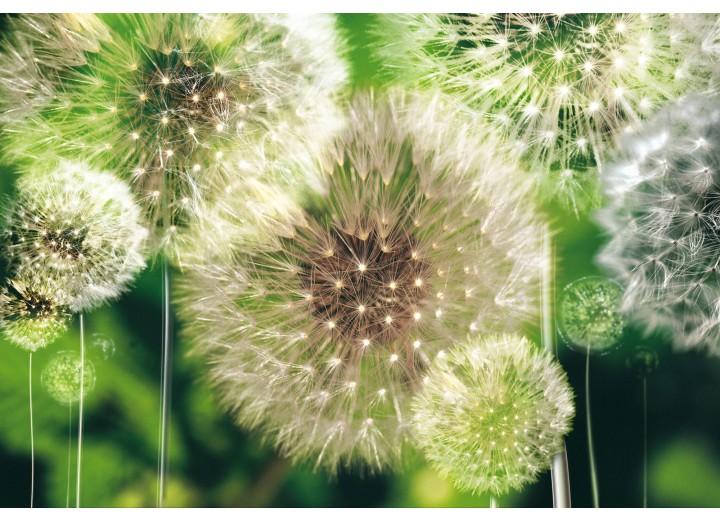 Fotobehang Vlies | Paardenbloem | Groen | 368x254cm (bxh)