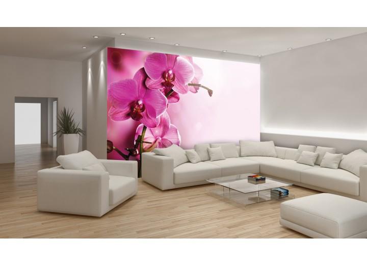 Fotobehang Vlies   Orchidee, Bloem   Roze   368x254cm (bxh)