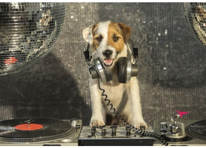 Fotobehang Vlies | Hond, Modern | Zilver | 368x254cm (bxh)
