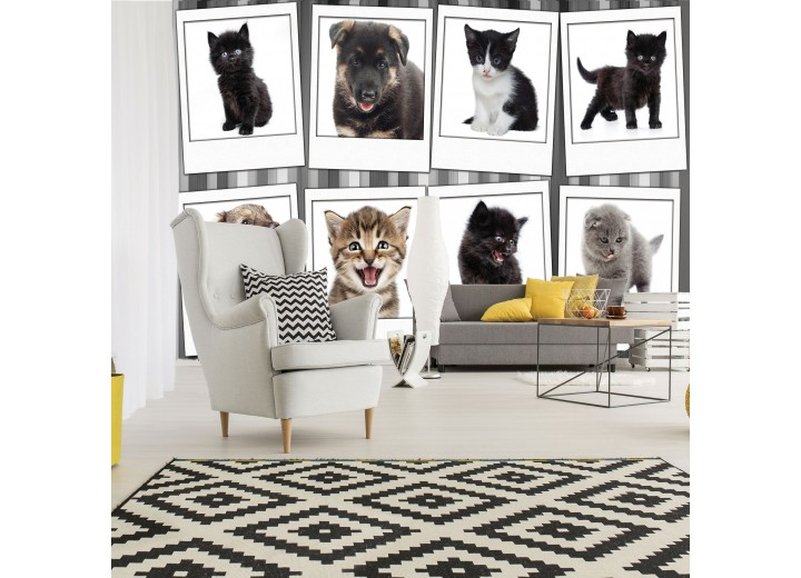 Fotobehang Vlies | Hond, Kat | Grijs, Wit | 368x254cm (bxh)