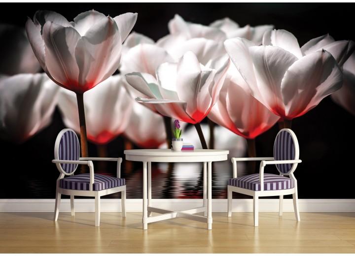 Fotobehang Vlies | Bloemen, Tulpen | Wit | 368x254cm (bxh)