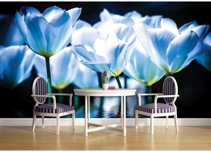 Fotobehang Bloemen, Tulpen | Blauw | 416x254