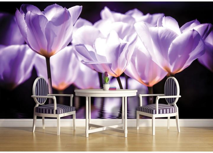 Fotobehang Vlies   Bloemen, Tulpen   Paars   368x254cm (bxh)