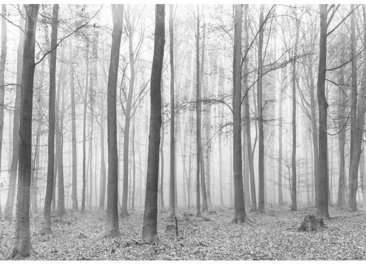 Fotobehang Vlies | Bos | Grijs | 368x254cm (bxh)