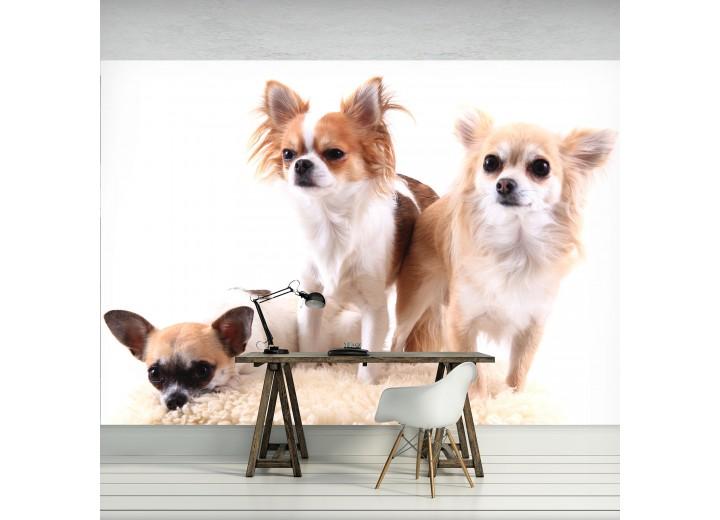 Fotobehang Vlies | Hond | Bruin, Wit | 368x254cm (bxh)