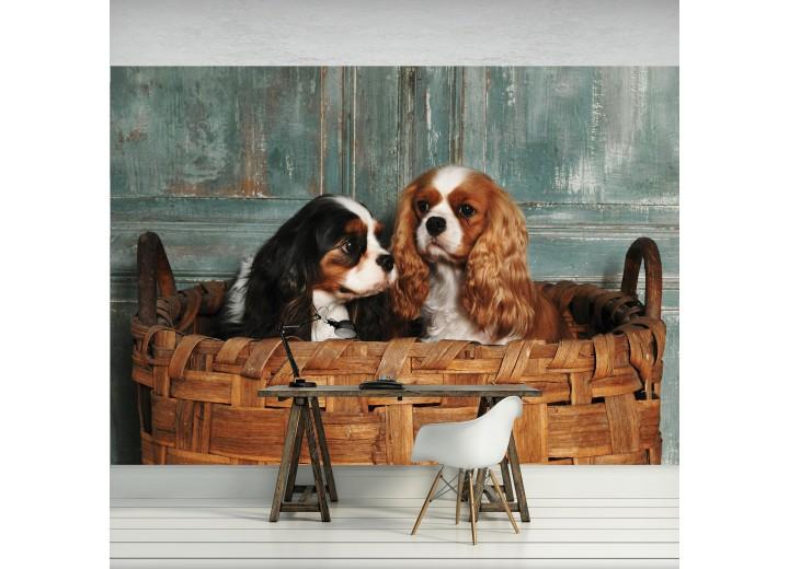 Fotobehang Vlies   Hond   Bruin, Groen   368x254cm (bxh)
