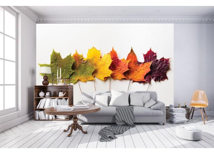 Fotobehang Vlies | Herfst, Modern | Groen | 368x254cm (bxh)