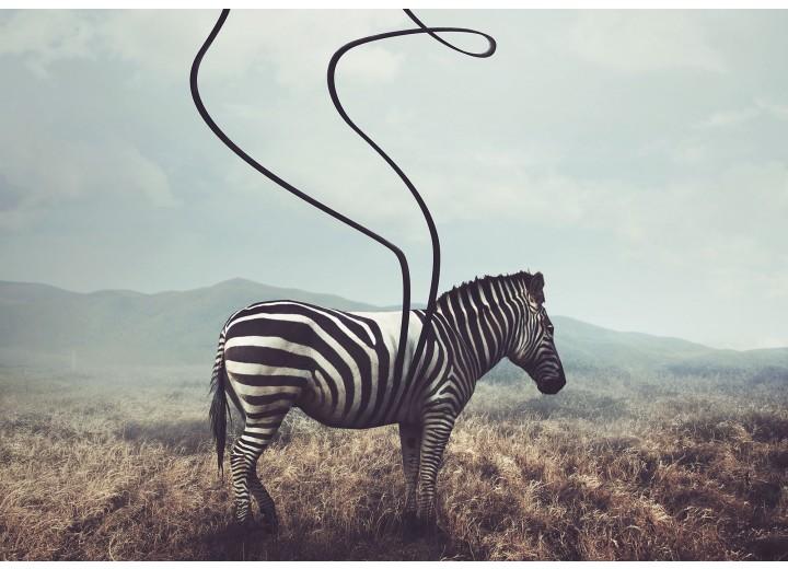Fotobehang Vlies   Zebra, Wild   Grijs   368x254cm (bxh)