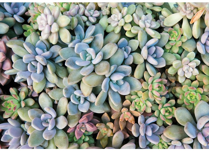 Fotobehang Vlies | Bloemen | Blauw, Groen | 368x254cm (bxh)