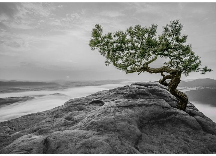 Fotobehang Vlies | Boom, Natuur | Grijs | 368x254cm (bxh)