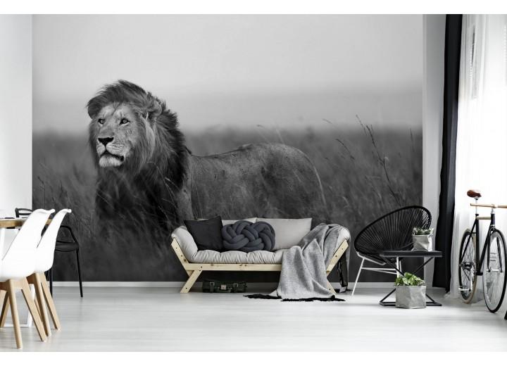 Fotobehang Vlies   Leeuw, Wild   Zwart   368x254cm (bxh)