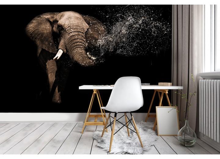 Fotobehang Vlies | Olifant | Zwart, Bruin | 368x254cm (bxh)