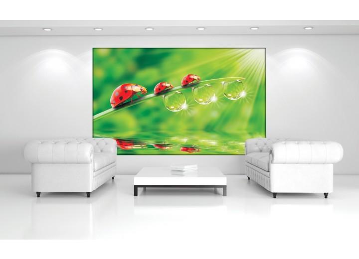 Fotobehang Vlies | Natuur | Rood, Groen | 368x254cm (bxh)