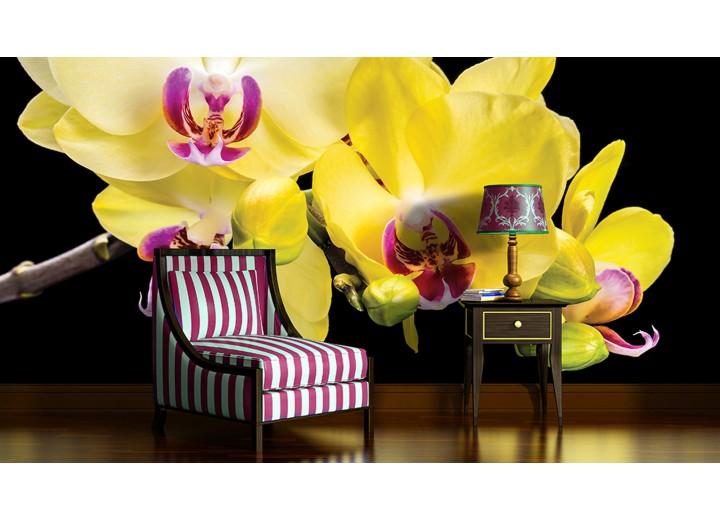 Fotobehang Vlies | Bloemen, Orchidee | Geel | 368x254cm (bxh)