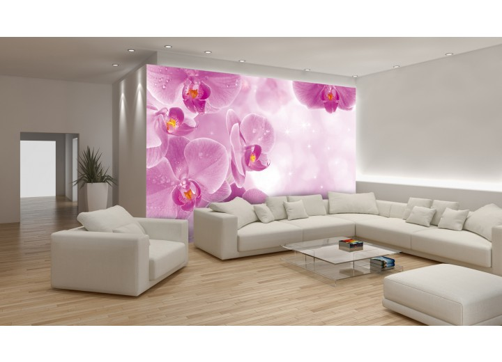Fotobehang Bloemen, Orchidee | Roze, Wit | 416x254