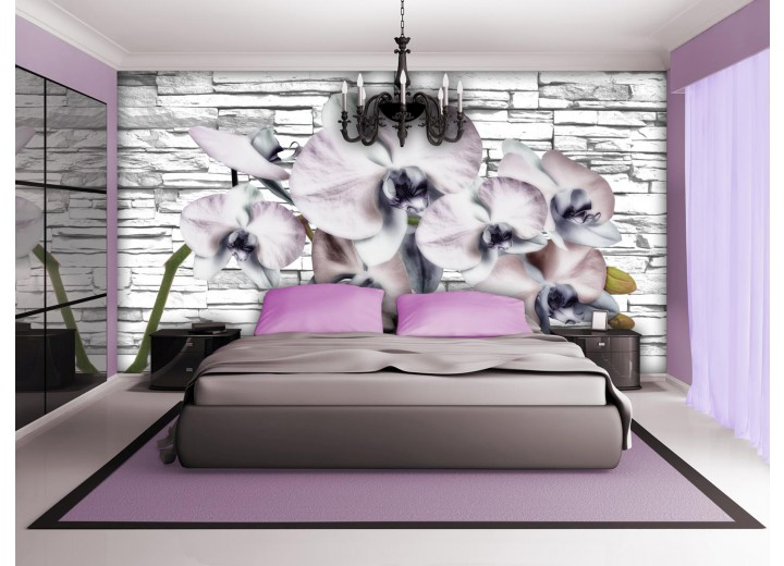 Fotobehang Bloemen, Orchidee | Grijs | 416x254
