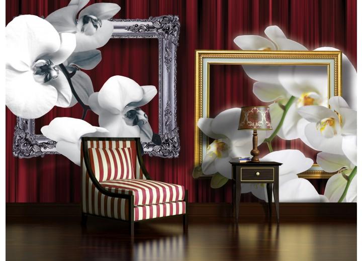 Fotobehang Bloemen, Orchidee | Wit | 416x254