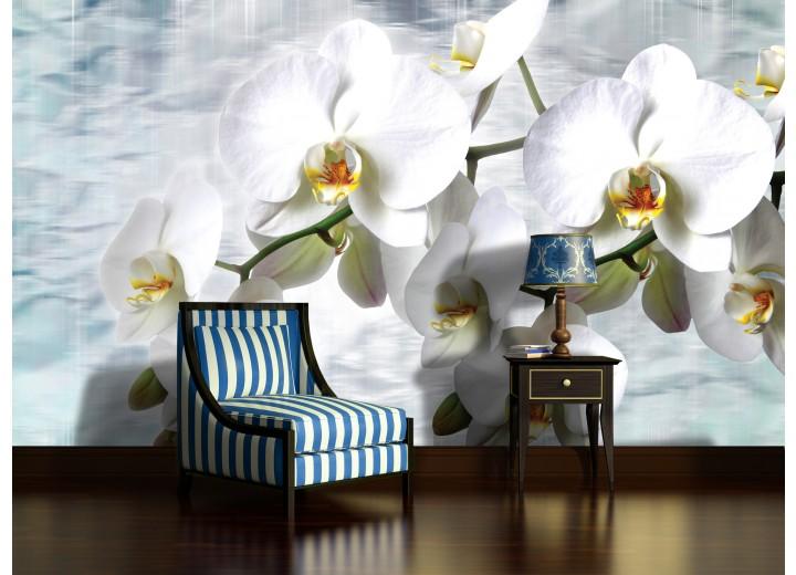 Fotobehang Vlies | Orchidee, Bloemen | Wit | 368x254cm (bxh)