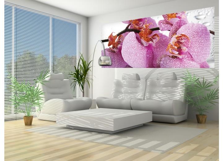 Fotobehang Bloemen, Orchidee | Paars | 250x104cm