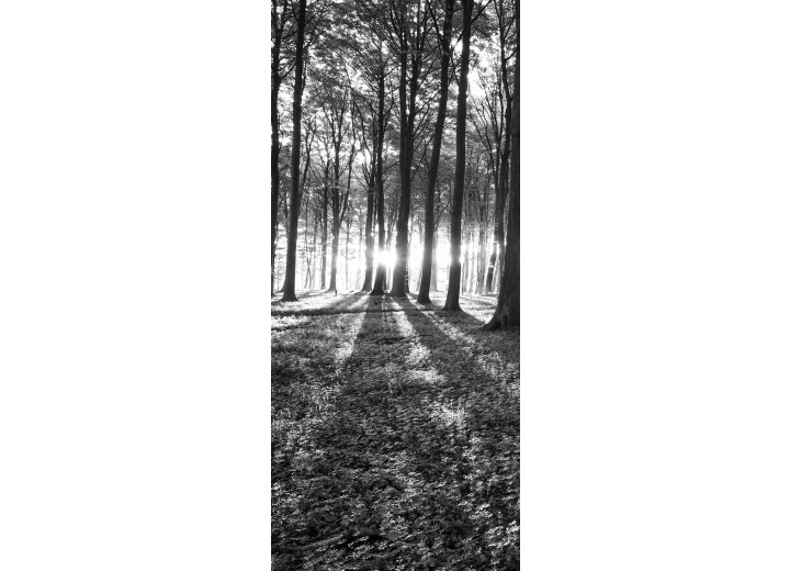 Deursticker Muursticker Bos, Natuur | Zwart, Wit | 91x211cm