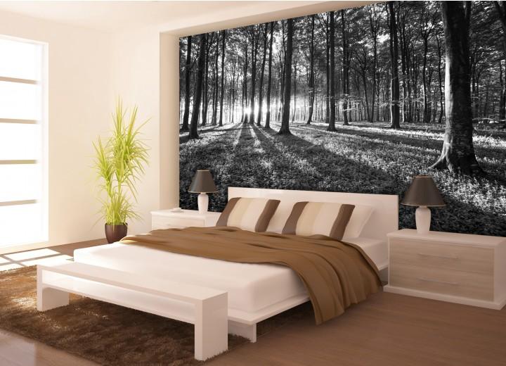 Fotobehang Vlies | Bos, Natuur | Zwart, Grijs | 368x254cm (bxh)