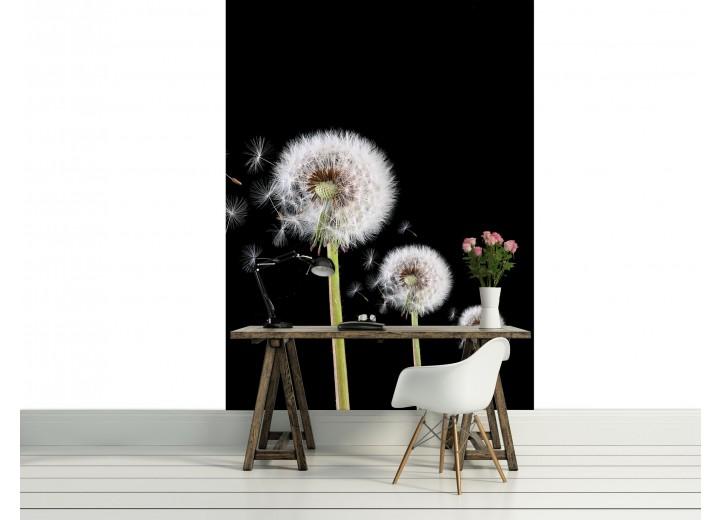 Fotobehang Papier Paardenbloem | Zwart, Wit | 184x254cm