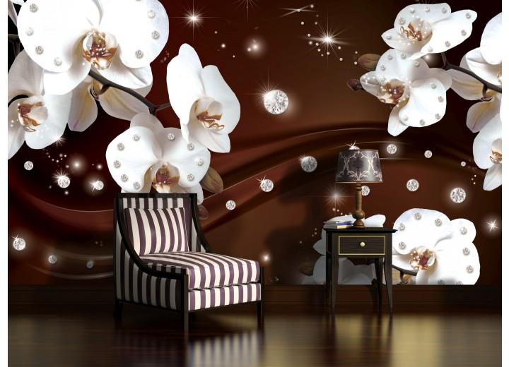 Fotobehang Orchideeën, Bloemen | Wit | 104x70,5cm