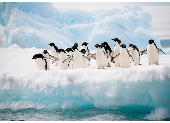 Fotobehang Papier Pinguïn, Dieren | Wit | 254x184cm