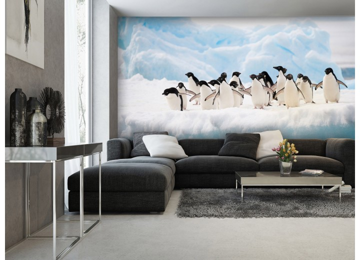Fotobehang Vlies   Pinguïn, Dieren   Wit   368x254cm (bxh)