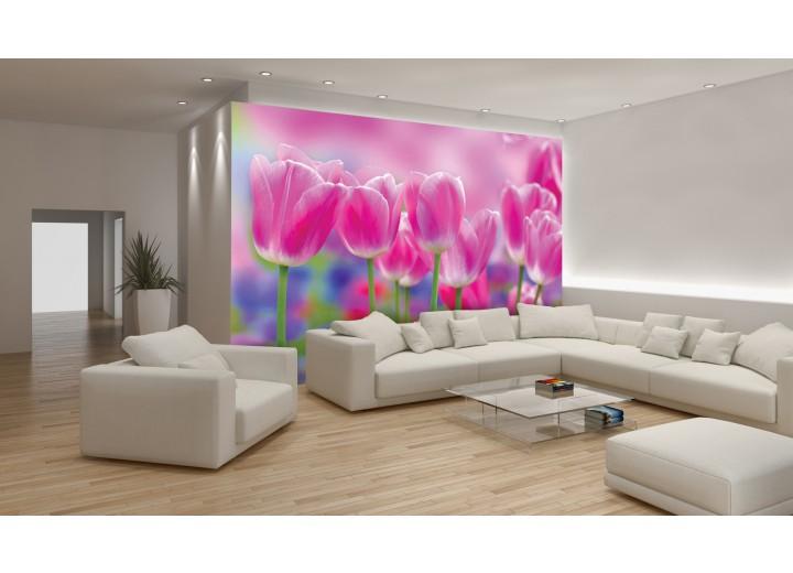 Fotobehang Bloemen, Tulpen | Roze | 208x146cm