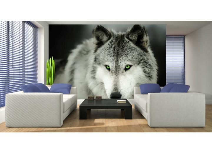 Fotobehang Wolf | Grijs | 208x146cm