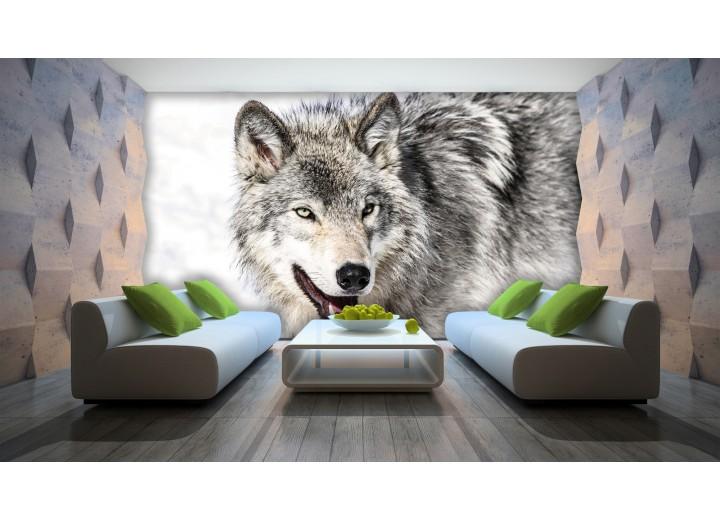 Fotobehang Wolf | Grijs | 312x219cm