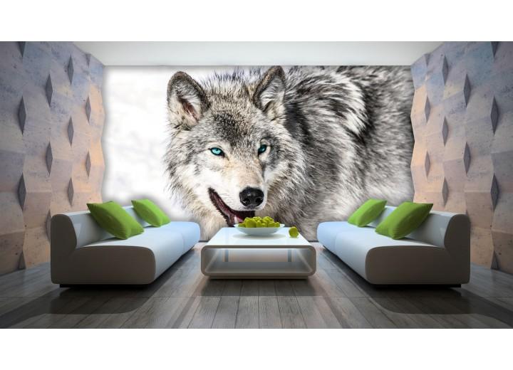 Fotobehang Wolf | Grijs, Wit | 416x254