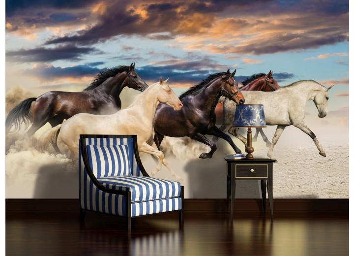 Fotobehang Paarden | Crème, Blauw | 416x254