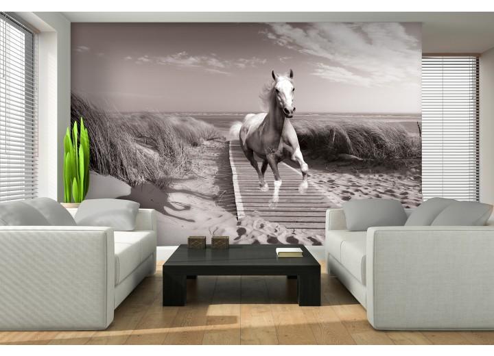 Fotobehang Papier Paard, Strand | Grijs | 254x184cm