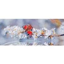 Fotobehang Vlinder | Grijs | 250x104cm
