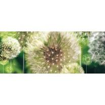 Fotobehang Paardenbloemen | Groen | 250x104cm