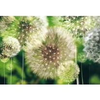 Fotobehang Papier Paardenbloemen | Groen | 368x254cm