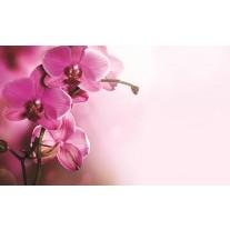 Fotobehang Papier Orchidee, Bloem | Roze | 254x184cm