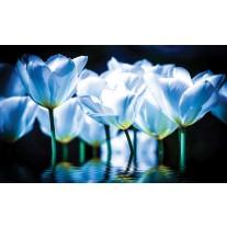Fotobehang Papier Bloemen, Tulpen | Blauw | 254x184cm