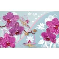 Fotobehang Orchideeën, Bloemen | Roze | 152,5x104cm