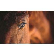Fotobehang Papier Paarden | Bruin | 254x184cm