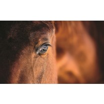 Fotobehang Papier Paarden | Bruin | 368x254cm
