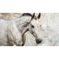 Fotobehang Papier Paarden | Wit | 254x184cm