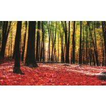 Fotobehang Papier Bos | Rood, Bruin | 254x184cm