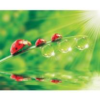 Fotobehang Papier Natuur | Rood, Groen | 254x184cm