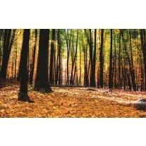 Fotobehang Papier Bos | Bruin | 254x184cm