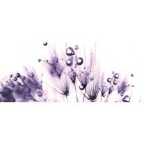 Fotobehang Bloemen | Paars, Wit | 250x104cm