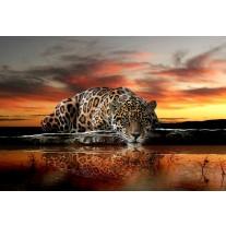 Fotobehang Papier Wilde dieren | Bruin, Oranje | 254x184cm